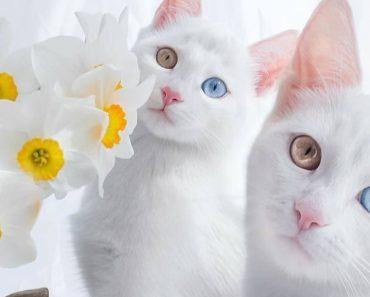 beautiful twin cats