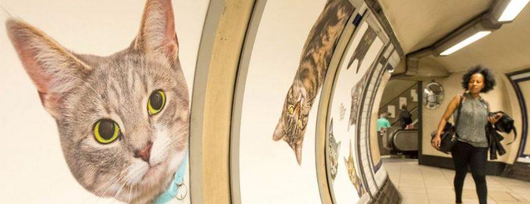 cats london subway
